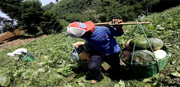 Kabupaten Bandung Berhasil Expor Sayur Mayur