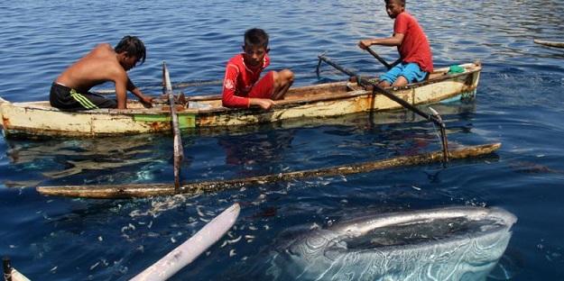 Wisata Hiu Paus Kabupaten Bone Bolango