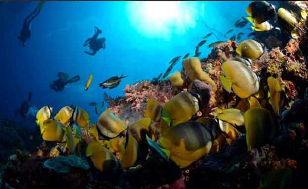 alor-diving